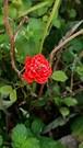 20181218_120047 (Feralysa) Tags: flor flower rosa hibisco natureza