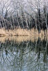 Reflections (Greg Hitchcock) Tags: 35mm analog film iso400 kodak nevillepark portra portra400 analogue canon eos3 trees lake reflections winter c41
