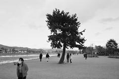(lisztchang.com) Tags: leica m2 kodak blackwhite blackandwhitefilm filmphotography elmarit 28mm 35mm japan kyoto arashiyama street riverside dark 2019