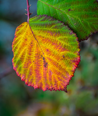 Multi-Colora. (Omygodtom) Tags: rainbow colorful colours leaf nature natural macro bokeh outside contrast coth5 nikkor nikon70300mmvrlens nikon usgs smileonsaturday multicolora