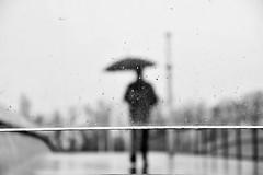 Rain (jaume zamorano) Tags: blackandwhite blancoynegro blackwhite blackandwhitephotography blackandwhitephoto bw d5500 ground gente lleida lluvia monochrome monocromo nikon noiretblanc nikonistas pov people pluja pluie rain raining street streetphotography streetphoto streetphotoblackandwhite urban urbana view