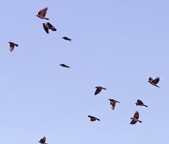 Naakat (TheSaOk) Tags: lintu linnut birdlife bird birdwatch birdlover yleluonto luontokuva wildlife