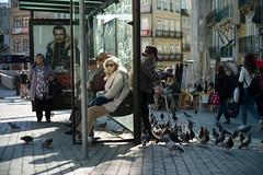 Waiting for the Man (Adam Bonn) Tags: 50mm leica leicam9 leicam outdoors feedingpigeons pigeon 7artisans 7artisans50mmf11 street streetphotography