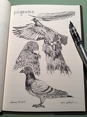 Pigeons (schunky_monkey) Tags: fountainpen penandink ink pen illustration art drawing draw journal sketchbook sketching sketch feathers flying nature bird pigeons pigeon