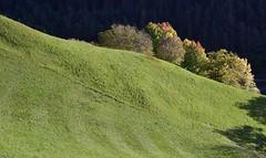 Völs am Schlern - Weideland in Ums; Südtirol, Italien (92a) (Chironius) Tags: alpen dolomiten südtirol italien altoadige dolomiti baum bäume tree trees arbre дерево árbol arbres деревья árboles albero árvore ağaç boom träd herbst herfst autumn autunno efteråret otoño höst jesień осень völs