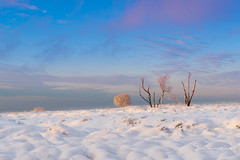 Winter Colors (Ellen van den Doel) Tags: 2018 fagnes belgie zonsondergang winter wolk nature venen outdoor mont sunset landscape snow sneeuw hautes rigi hoge bomen landschap wolken cloud color weg tree natuur februari belgium weekend ardennen jalhay wallonie belgië be