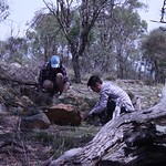 "Handweeding horehound 20190120 weeding team <a style=""margin-left:10px; font-size:0.8em;"" href=""http://www.flickr.com/photos/61627737@N03/46350153075/"" target=""_blank"">@flickr</a>"