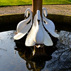 Time for reflection (Nanny Bean) Tags: sculpture fountain swans wings
