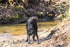 20190215-IMG_8723 (Alderbabbsack) Tags: struppi hund