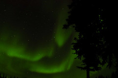March Madness-114 (juan_guthrie) Tags: northernlights yellowknife nwt aurora