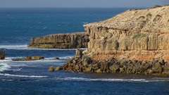 0333 Cape Bauer, Streaky Bay (roving_spirits) Tags: australia australien australie southaustralia eyrepeninsula