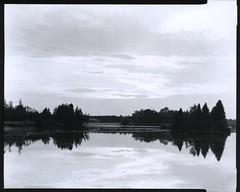 Lake (m.dahlke) Tags: film blackandwhite large format toyo ilford fp4 darkroom earl rowe provincial park ontario canada