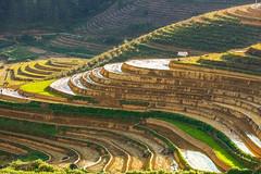 File378.0617.QL32.Hồ Bốn.Tân Uyên.Lai Châu (hoanglongphoto) Tags: asia asian vietnam northvietnam northwestvietnam landscape scenery vietnamlandscape vietnamscenery mountainouslandscape mountain afternoon sunlight sunny sunnyweather sierra flanksmountain hill hillside tophill terraces terracedfields hdr canon canoneos1dsmarkiii tâybắc laichâu tânuyên phongcảnh thiênnhiên buổichiều phongcảnhvùngnúi phongcảnhtâybắc núi sườnnúi đồi dãyđồi sườnđồi đỉnhđồi nắngchiều ruộngbậcthang ql32 phúckhoa hồbốn northernvietnam bắcviệtnam mountainouslandscapeinvietnam sceneryterracedfieldsinvietnam canonef70200mmf28lisiiusm afternoonsunshine