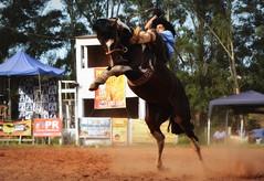 Darlan e Cara Suja da Cerro Verde (Eduardo Amorim) Tags: gaúcho gaúchos gaucho gauchos cavalos caballos horses chevaux cavalli pferde caballo horse cheval cavallo pferd pampa campanha fronteira quaraí riograndedosul brésil brasil sudamérica südamerika suramérica américadosul southamerica amériquedusud americameridionale américadelsur americadelsud cavalo 馬 حصان 马 лошадь ঘোড়া 말 סוס ม้า häst hest hevonen άλογο brazil eduardoamorim gineteada jineteada