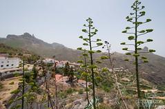 Tejeda (Jexweber.fotos) Tags: canarias españa grancanaria islascanarias laspalmas tejeda vacaciones verano