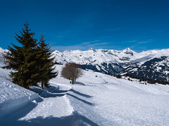 Surselva (oonaolivia) Tags: surselva graubünden grisons schweiz switzerland landschaft landscape winter winterscenery snow snowshoeing berge mountains nature white