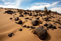 Tree on the rocks (s_andreja) Tags: mauritania desert tree black rocks
