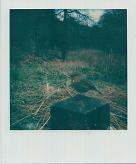 Scan 4 (Emily_sarahd) Tags: polaroids nature naturephotography landscapes flowers colour colourful pink woods forest trees sun