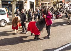 2702  Ponys (Ricard Gabarrús) Tags: fauna pony caballo animales animal ricardgabarrus olympus fiesta calle street ricgaba