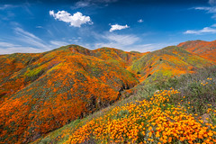 Walker Canyon Trail Lake Elsinore Poppy Reserve Spring Poppy Apocalypse! Sony A7RII Sony FE 16-35mm f/2.8 GM Lens Gmaster Lens! California Poppies Orange Wildflowers Superbloom Fine Art Photography! Elliot McGucken Fine Art Landscape & Nature Photography! (45SURF Hero's Odyssey Mythology Landscapes & Godde) Tags: walker canyon trail lake elsinore poppy reserve apocalypse sony a7rii fe 1635mm f28 gm lens gmaster california poppies orange wildflowers superbloom fine art photography elliot mcgucken landscape nature
