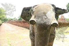 Angkor_Mebon Orientale_2014_20