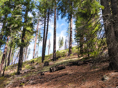 Somewhere Around Here (ex_magician) Tags: tomahawktrail klamathcounty oregon moik trail photo photos picture pictures image lightroom adobe adobelightroom interesting hiking