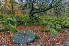 Classic Padley Gorge........that tree and millstone again (gavsidey) Tags: padley gorge derbyshire ngc d500 trees mill stone autumn colour rocks peak district