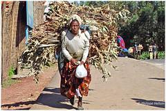 Tout au long des routes  © 3/3 (philippedaniele) Tags: ethiopie abyssinie hautsplateaux ethiopiens paysages maisons cases carte portage bois eucalyptus feuillages