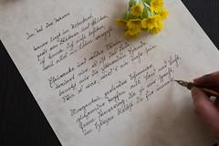 Himmelsschlüsselchen (Gret B.) Tags: himmelsschlüsselchen schlüsselblume blume flower handschrift sütterlin hand schreiben feder schreibfeder tinte ink gedicht lyrik poem poesie kalligraphie 52wochen 52weeksproject 52wochenprojekt 52weeks