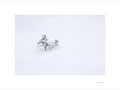 Las formas del invierno (E. Pardo) Tags: invierno winter nieve snow schnee luz licht light árbol tree baum formas formen forms gesäusenationalpark steiermark austria