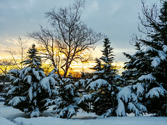 Snow in the morning (CU TEO MD) Tags: snow trees sun sunrise outdoor winter ngc twop soe artofimages simplysuperb