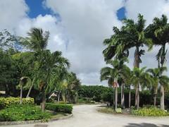 Graeme Hall Nature Sanctuary (D-Stanley) Tags: graemehallnaturesanctuary mangrove wetland caribbean barbados