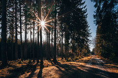 Sun in the forest. (Robert Hájek) Tags: sun forest czphoto czech czechrepublic nature landscape voigtlander sky sony sonya7iii