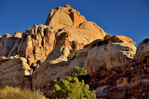 Caught in the Light of the Early Morning Sun (Capitol Reef National Park)