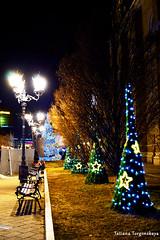 Елки на улице Змай Йовина (tatianatorgonskaya) Tags: сербия зимавсербии новыйгод рождество европа балканы путешествие блогопутешествиях блогожизнизарубежом balkans balkanstravel balkan srbija serbia europe novisad новисад зимавновисаде новыйгодвсербии новыйгодвевропе