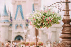 In Bloom (The Mr and The Mrs) Tags: disney disneyphotography disneyparks disneyworld disneytrips magickingdom parks bloom flowers flower garden mainstreet colors colorful beauty castle nikon wwwthemrandthemrscom bennetandkristi fun home life decoration camera