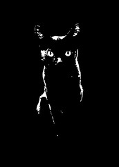 black cat (www.streetphotography-berlin.com) Tags: cat animal portrait art fineart blackandwhite blackwhite monochrome
