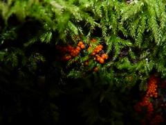Slime-Mold (jmunt) Tags: slimemold moss terminator twilightzone