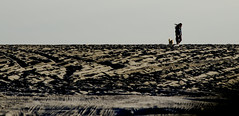 [ Tutte le direzioni - All directions ] DSC_0722.R2.jinkoll (jinkoll) Tags: people woman girl walk walking step dog friend pet wind windy beach sand spiaggia playa sky tracks horizon over hill thinking thoughts street