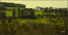 February Feels Like Spring... (Picture post.) Tags: landscape nature green trees hills winter fields paysage arbre
