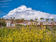 Clouds over Newport Beach homes (mutovkin) Tags: california clouds g9 hills house lumix lumixg9 newportbeach palmtree panasonic panasonicg9 sky