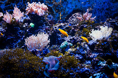 Tropical sea underwater with coral reefs and fish. beautiful view of sea life (TEIA - 台灣環境資訊協會) Tags: animal beauty biodiversity blue color colorful diving environment life many marine natural nature reef sea seascape
