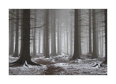 THE WINTER WOODLAND (Neil Shaw Images) Tags: