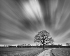 Streaming Tree (frank_w_aus_l) Tags: mix natur nature tree path monochrome sky longexposure nikon d810 nikkor 1635 nd netb noiretblanc schwarzweis sw black blackandwhite white