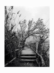 A nice corner (Italian Film Photography) Tags: wood nature landscape tree bushes bridge blackandwhite clouds sky film analogue pellicola silver argentique traditional kodak 400tmy tmax400 fujifilm ga645zi 120 mediumformat blackwhite bw bianco e nero explored