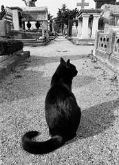 (Alina Mayboroda) Tags: portrait photo artist photographer photography artpeople we senses fubiz nyc newyorkcity tendermagdigitalart ifyoulive etude thinkverylittle pr0jectbnw artbnwsomweremagazine milano cimitero monumentale