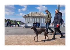 Walking the dog (PeteZab) Tags: cromer crabbing people dog walking eating pier sea seaside coast bluesky norfolk uk peterzabulis greyhound