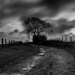 DSC_2893: Wayfarer's Walk sunrise (Colin McIntosh) Tags: combegibbet nikon d610 55mm f12 sc manual focus long exposure