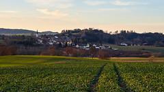 Waldviertler Abendstimmung (richard.kralicek.wien) Tags: landscape austria rural evening winter waldviertel