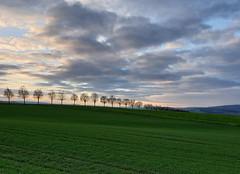 2019 Germany // Wanderung bei Holzheim (maerzbecher-Deutschland zu Fuss) Tags: wanderweg wandern deutschland germany maerzbecher deutschlandzufuss deutschlandzufus rheinlandpfalz taunus 2019